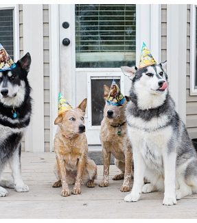 Puppy Birthday - Our Kind of Wonderful