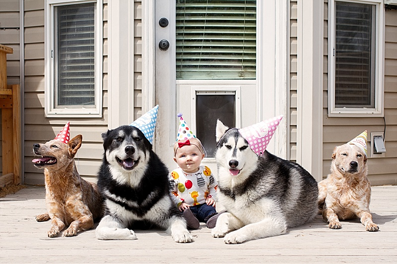 Padfoot, Sharky, Sherlock, and Luna Turned 2! - Our Kind of Wonderful